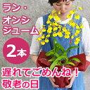 敬老の日 プレゼント 花 オンシジュームの鉢植え(2本立 花鉢 鉢花)のギフトを黄色い蘭(オンシジウム)送料無料
