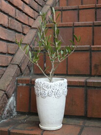 オリーブ 寄せ植え ガーデニング ガーデン ギフト【花遊び】『オリーブ♪ローズアンティークポット』