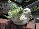 ガーデニングガーデンハンギング寄せ植えスワンバードガラスアンティーク【花遊び】【NEW】『白鳥ポット』