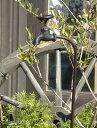 ガーデニング雑貨 ガーデン 蛇口 車輪 アイアンハンギング インテリア 雑貨 プランター【花遊び】『ナチュール♪タップピック・ブラウン』