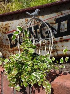 ガゼボ 鳥かご 小鳥 ガーデニング ガーデン雑貨 アンティーク アイアン 寄せ植え【花遊び】『鳥かご・DEMI』