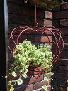 ガーデニング ガーデン ハンギング アイアン ウエルカム壁掛け 棚 寄せ植え ガーデニング ガーデン【花遊び】『ハンギ…