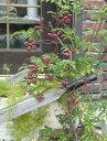 ガーデン ガーデニング 雑貨『ウォールデコ スイートフラワー・レッド』