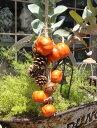 リース 玄関 フラワー 造花 ハロウィンガーデニング ガーデン 雑貨 アンティーク【花遊び】【NEW】『パンプキン♪スターベル』