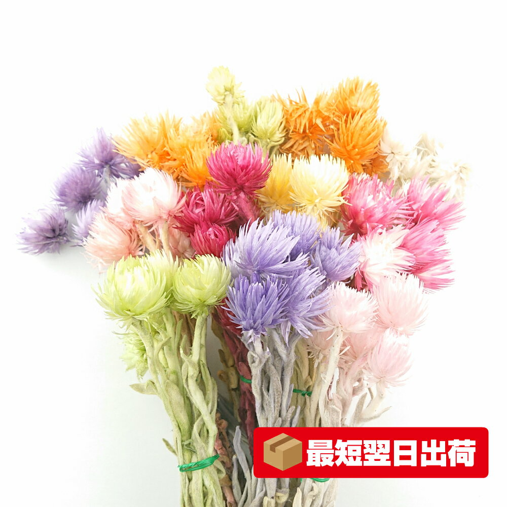 【大地農園】ミニシルバーデージー 小分け(6輪入り) プリザーブドフラワー 使い切り 資材 花材
