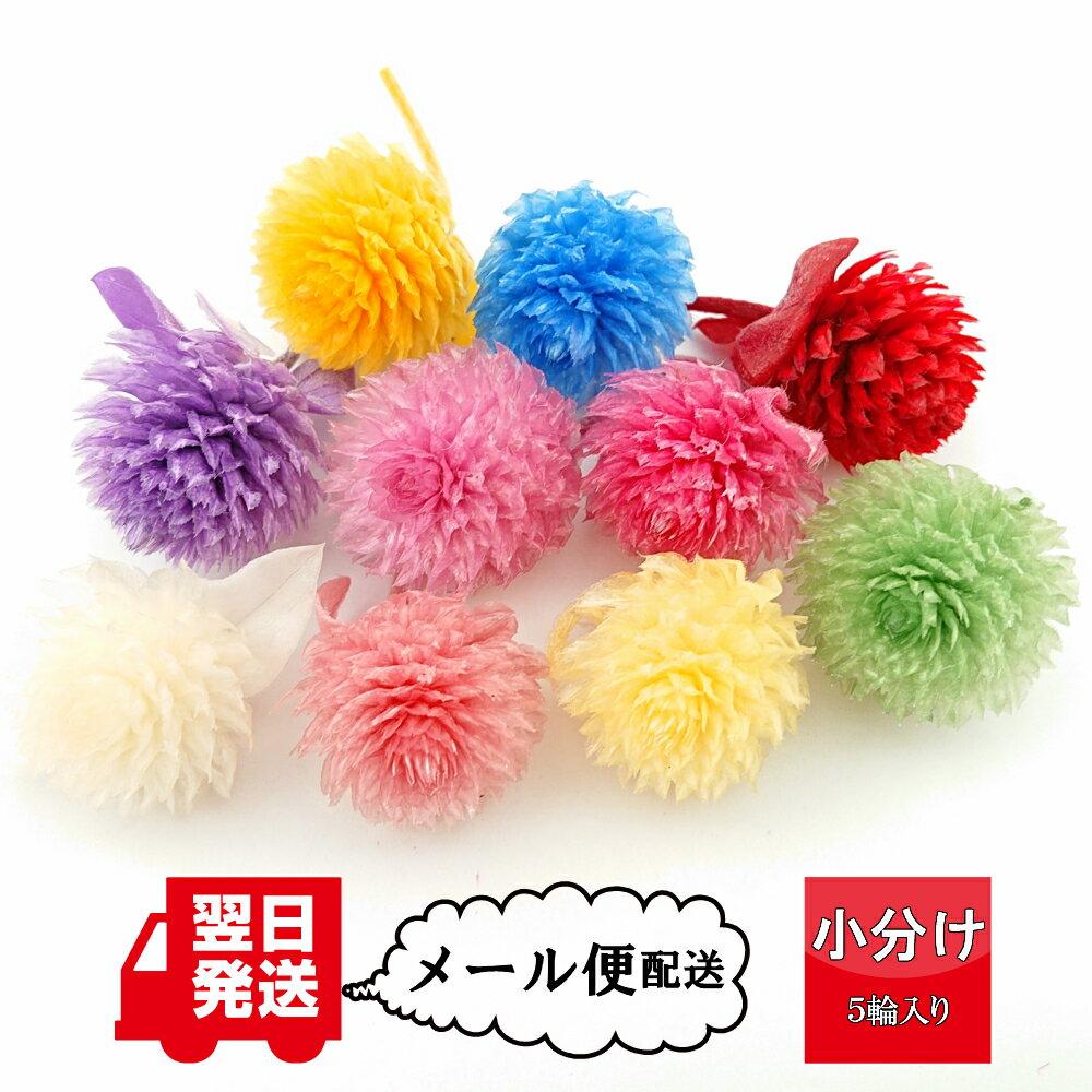 【大地農園】千日紅 小分け(5輪入り)プリザーブドフラワー 使い切り 資材 花材