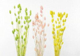 即日 【ドライ】大地農園/ポアプランツ 15g パステルイエロー/42020-501《 ドライフラワー ドライフラワー花材 ポアプランツ 》