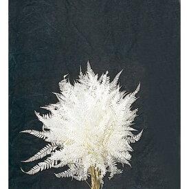 即日 【ドライ】大地農園/ヒメワラビ 20枚 白/50330-011ドライフラワー ドライ葉物 葉物 手作り 材料