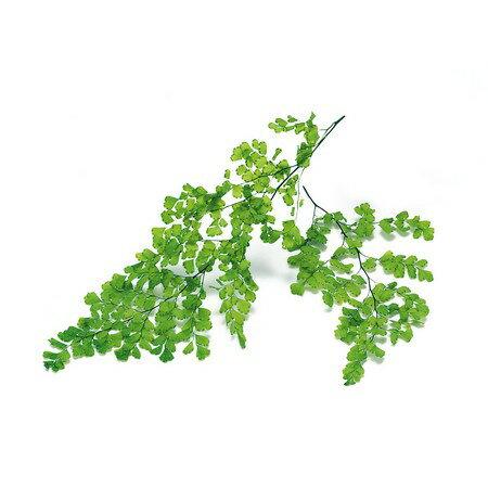 即日 【プリザーブド】大地農園/アジアンタム・ルーシー 8枚 フレッシュグリーン/03750-731《 プリザーブドフラワー プリザーブドグリーン 葉物 》