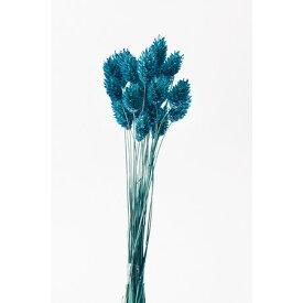 即日 【ドライ】大地農園/ポアプランツ 15g クラシックブルー/42020-630《 ドライフラワー ドライフラワー花材 ポアプランツ 》