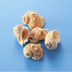松野ホビー/インテリアシェル(シロニシ)100g/IC-79【01】【取寄】[12個]《 花資材・道具 アクセサリー 夏の小物 》