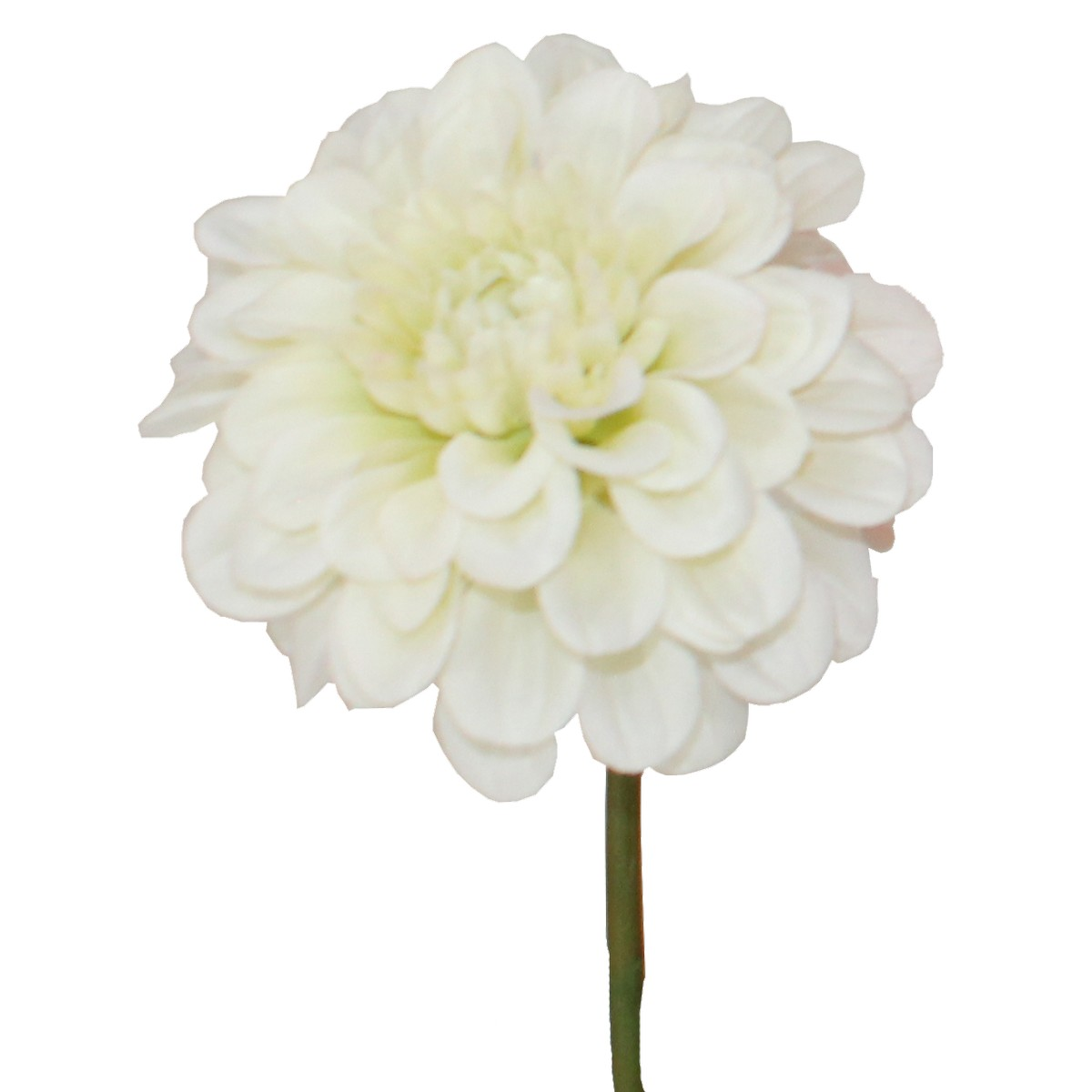 即日 【造花】パレ/ジニアピック クリームグリーン/P-8161-10《 造花(アーティフィシャルフラワー) 造花 花材「さ行」 ジニア 》