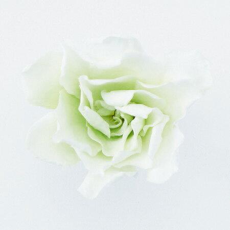 即日 【プリザーブド】大地農園/ソフトクチナシ・パルフェ 6輪 ホワイトグリーン/01063-703《 プリザーブドフラワー プリザーブドフラワー花材 小花 》