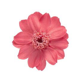 即日 【プリザーブド】大地農園/ジニア・小 マカロンピンク 12輪/03461-132《 プリザーブドフラワー プリザーブドフラワー花材 その他プリザーブドフラワー花材 》