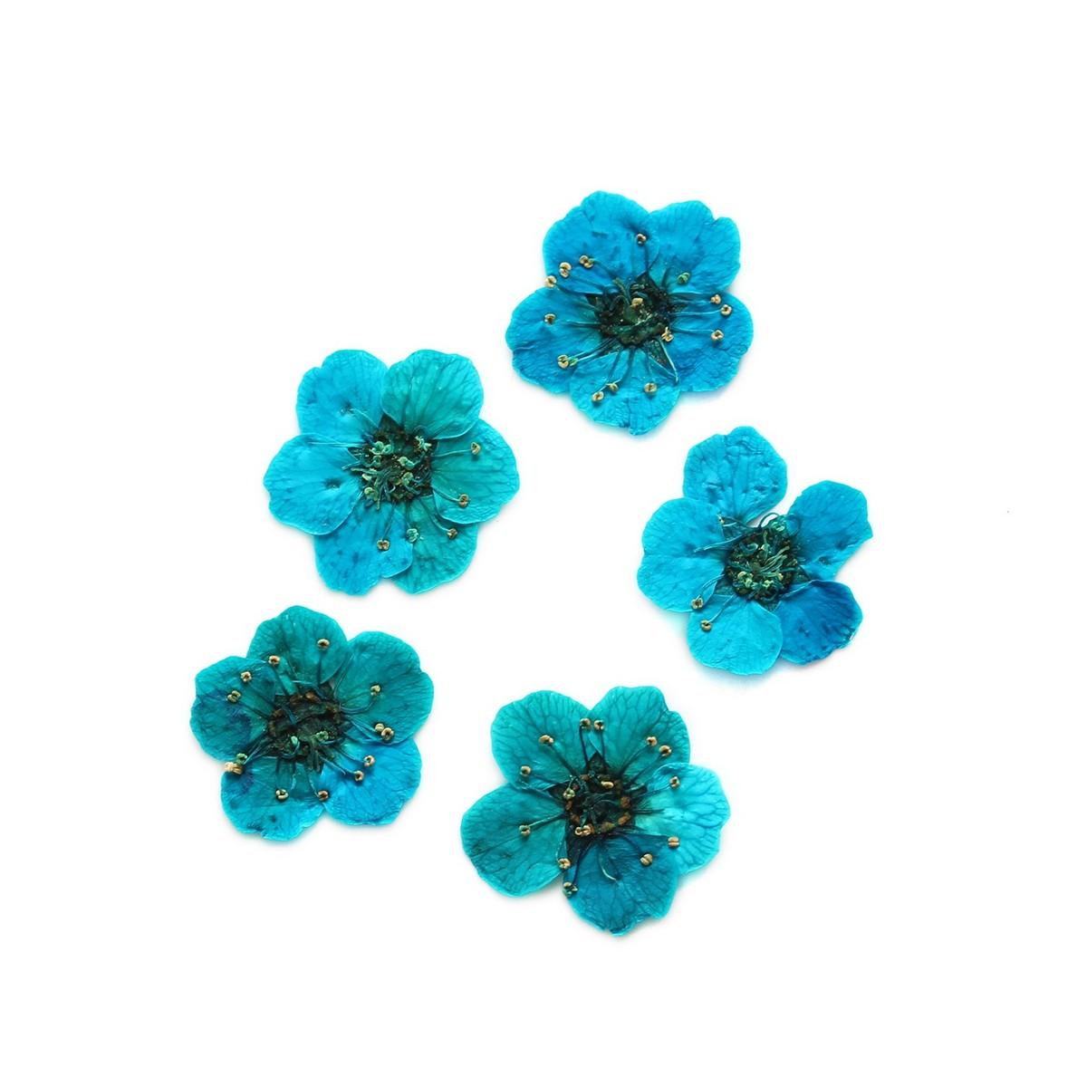 【ドライ】NBK/ドライフラワー コデマリ 約10×10mm ブルー 10枚入/KE1301-BL【01】【01】【取寄】《 ドライフラワー ドライフラワー花材 その他ドライフラワー 》