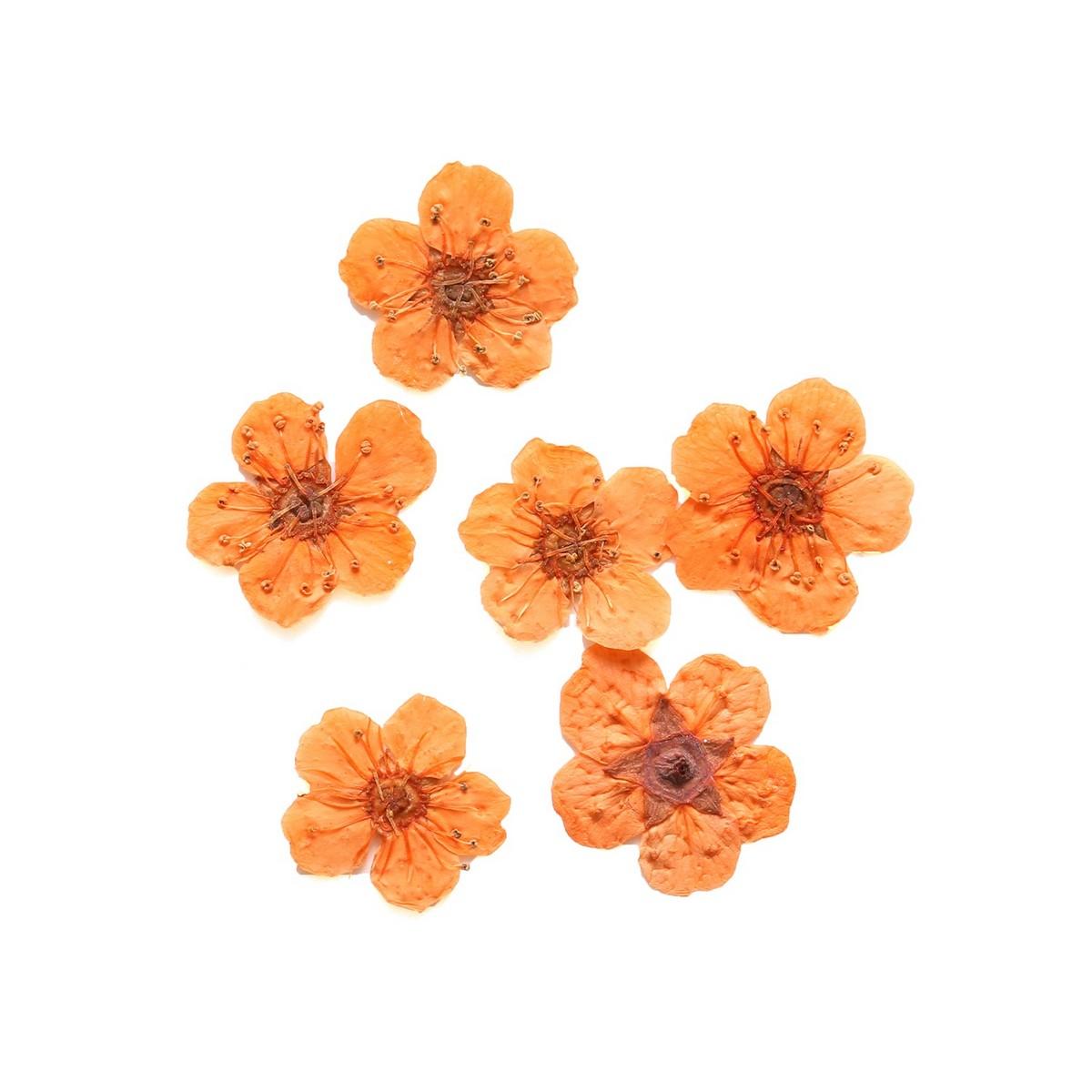 【ドライ】NBK/ドライフラワー コデマリ 約10×10mm オレンジ 10枚入/KE1301-OR【01】【01】【取寄】《 ドライフラワー ドライフラワー花材 その他ドライフラワー 》