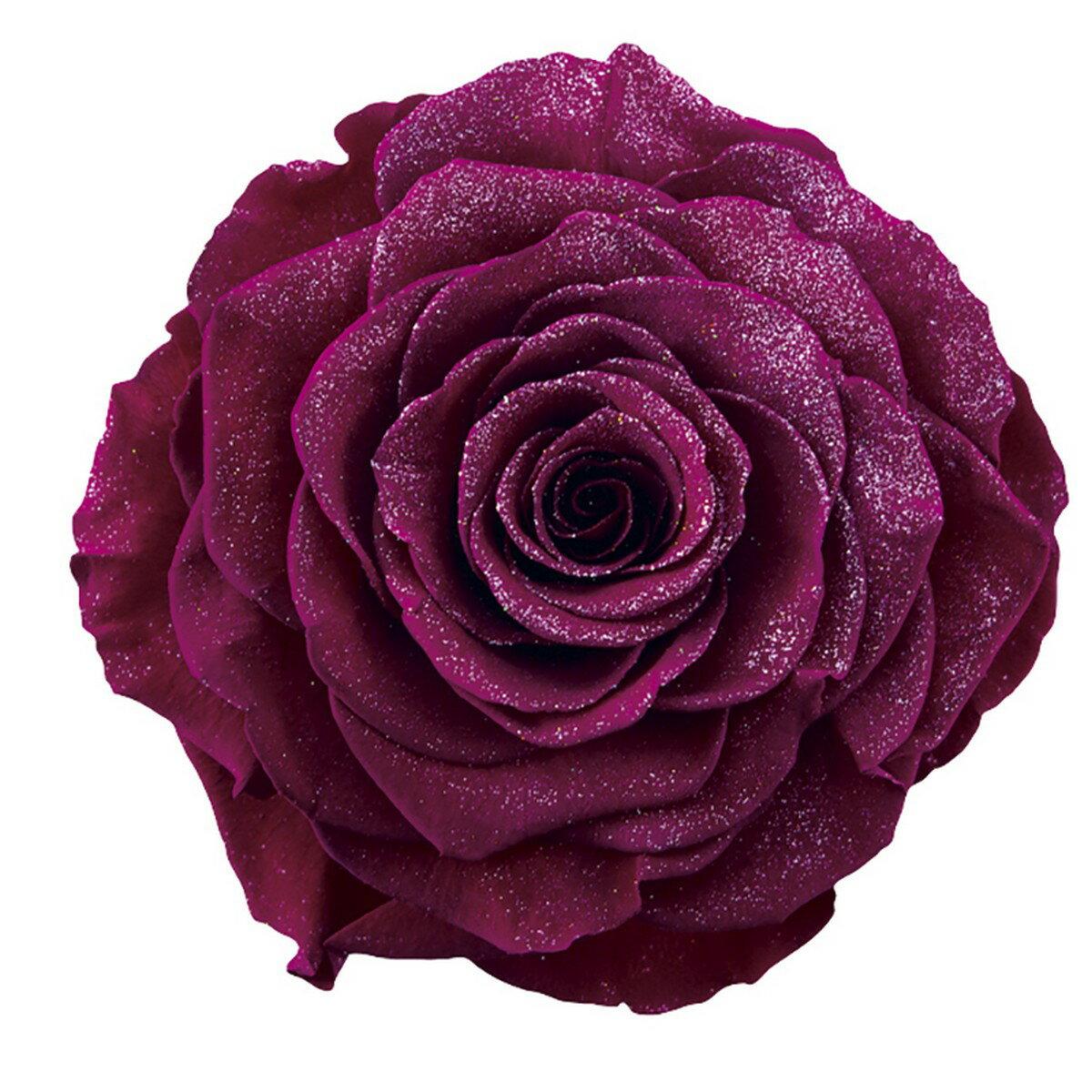 【プリザーブド】アモローサ/ダイヤモンドリンダ 1輪 リッチプラム/1109-52【01】【01】【取寄】《 プリザーブドフラワー プリザーブドフラワー花材 バラ(ローズ) 》