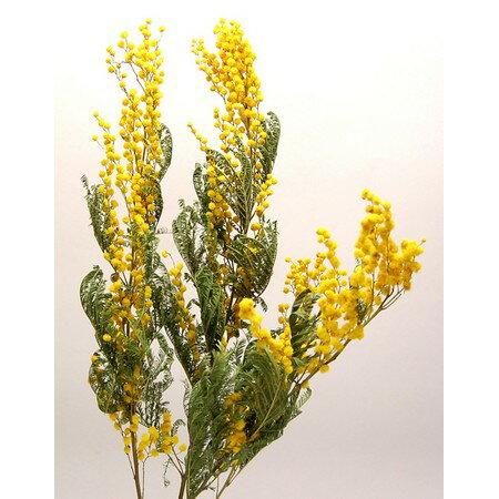 即日 【ドライ】コアトレーディング/ミモザ 約30g ナチュラル/17727《 ドライフラワー ドライフラワー花材 ミモザ 》