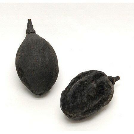 【ドライ】コアトレーディング/バオバブ 2個 ブラック/30328【21】【取寄】[5袋]《 ドライフラワー ドライ実物&フルーツ 木の実 》