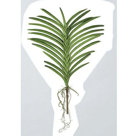 【造花】アスカ/バンダリーフ #051A グリーン/A-42780-51【01】【01】【取寄】《 造花(アーティフィシャルフラワー) 造花 花材「ら行」 ラン(蘭)・オーキッド 》