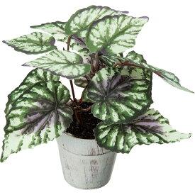 【人工観葉植物】YDM/ベゴニアポット グリーン/GLA-1487-GR【01】【取寄】《造花(アーティフィシャルフラワー) 人工観葉植物 カジュアルポット(卓上向け)》