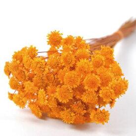 即日 【ドライ】フロールエバー/マーガレット 約20g オレンジ/FLDR0005-820