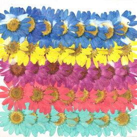 即日 【ドライ】押し花 ノースポール染めミックス(5色) 40輪/1-111NMドライフラワー 押し花 手作り 材料