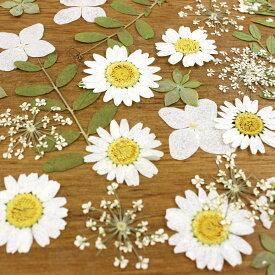 即日 【ドライ】押し花 ミックスパックC(ホワイト系)ドライフラワー 押し花 手作り 材料