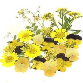 即日 【ドライ】押し花 ミックスパックD(イエロー系)ドライフラワー 押し花 手作り 材料