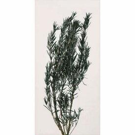 即日 【プリザーブド】大地農園/ローズマリー 約2本 グリーン/00180-700プリザーブドフラワー プリザーブドグリーン 葉物 手作り 材料
