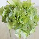 アリスハイドレンジア ライトグリーン アジサイ ハイドランジア