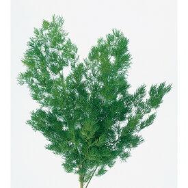 即日 【プリザーブド】大地農園/ミリオクラダス 15gグリーン/00160-700プリザーブドフラワー プリザーブドグリーン 葉物 手作り 材料