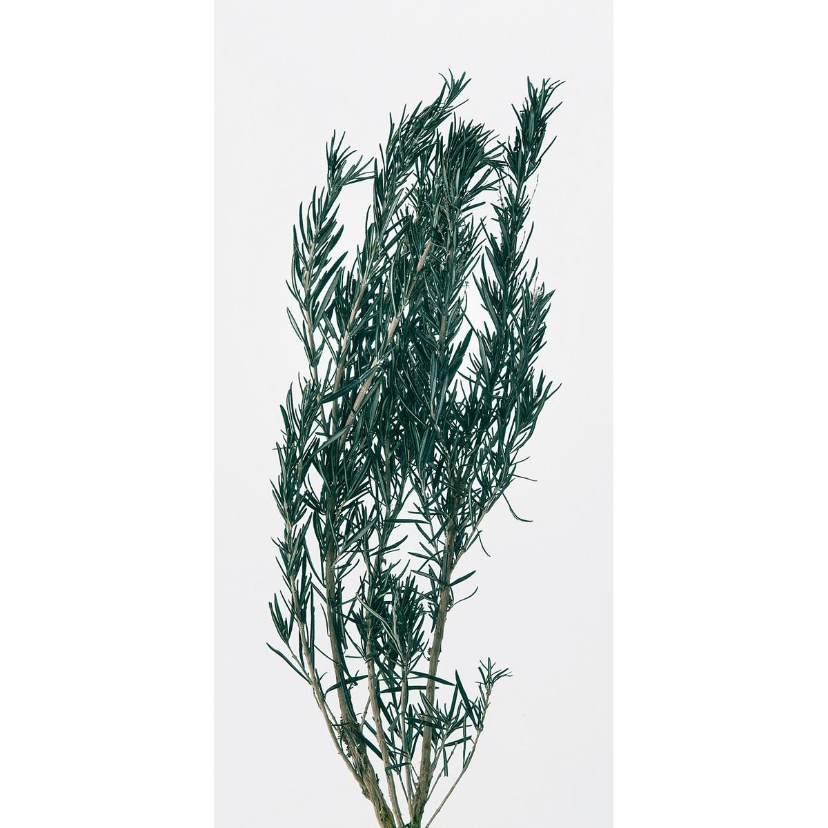 即日 【プリザーブド】大地農園/ローズマリー 約2本グリーン/00180-700《 プリザーブドフラワー プリザーブドグリーン 葉物 》