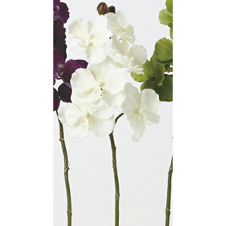 【造花】アスカ/ベルベットバンダオーキッド×6つぼみ×3NO.011クリームホワイト/A-32308【01】【取寄】《 造花(アーティフィシャルフラワー) 造花 花材「ら行」 ラン(蘭)・オーキッド 》