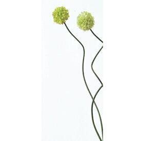 【造花】アスカ/ミニアリウム セロリ/A-31289-51【01】【取寄】《 造花(アーティフィシャルフラワー) 造花 花材「あ行」 アリウム 》