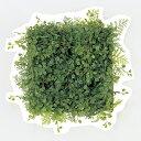 【造花】アスカ/ボタンリーフ&ファーンマット グリーン/A-41284-51A【01】【01】【取寄】《 造花(アーティフィシャ…