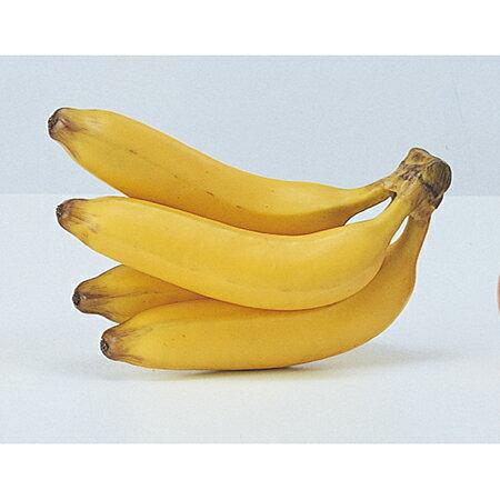 【造花】アスカ/バナナ イエロー/A-23026-10【01】【01】【取寄】《 造花(アーティフィシャルフラワー) 造花実物、フェイクフルーツ フルーツ、ベジタブル 》