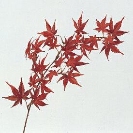 【造花】アスカ/モミジ(S) #002 レッド/A-46040-2【01】【取寄】