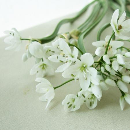 【生花】アリウム コワニー40cm程度::今週のオトク!■小花フェア対象[10本]