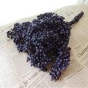 【生花/即納】【ドライ】ペイントペッパーベリー オーベルジーヌ 紫(束)[1束]※届日限定:9/19以降
