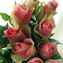 【生花】ケニアローズ ベルローズ、ベルビューなど(コーラル複色)60センチ[10本]