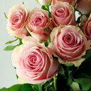 【生花】ケニアローズ セリー (ライトピンク) 60cm 【OR-82】[10本]