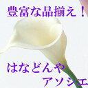 即日★【造花】アスカ/カラーリリィ(S) ホワイト/A-31387-1【00】《 造花 カラー》