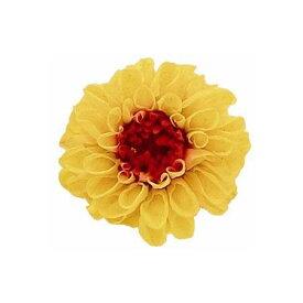 【プリザーブド】Vermont ジャノメダリア 12(マンゴー)/29251【01】【01】【取寄】《 プリザーブドフラワー プリザーブドフラワー花材 ダリア 》
