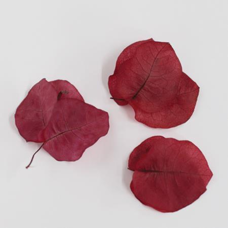 即日 【プリザーブド】Vermont ブーゲンビリア レッド/29602《 プリザーブドフラワー プリザーブドフラワー花材 ブーゲンビリア 》