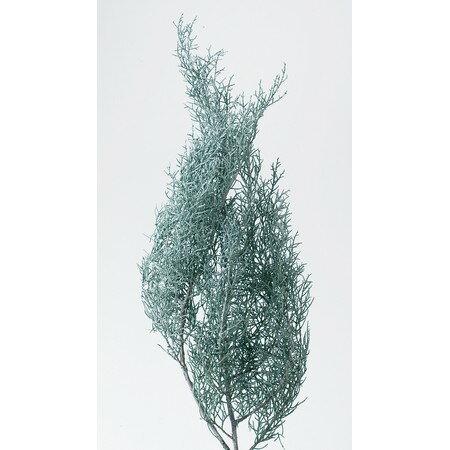 即日 【プリザーブド】大地農園/ブルーアイス 70g ウオッシュホワイト/01260-012《 プリザーブドフラワー プリザーブドグリーン 葉物 》