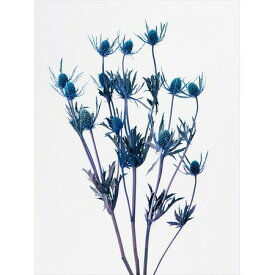 即日 【プリザーブド】大地農園/エリンジューム 35g パープル/0153-3-400 プリザーブドフラワー プリザーブドフラワー花材 小花
