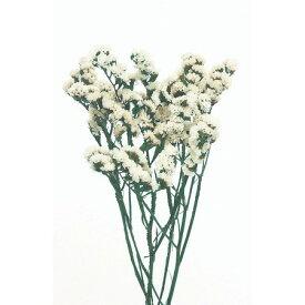 即日 【プリザーブド】大地農園/ソフトスターチス 30g 白/02450-010《 プリザーブドフラワー プリザーブドフラワー花材 小花 》