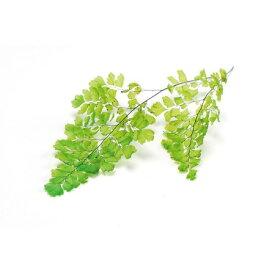 即日 【プリザーブド】大地農園/アジアンタム・ルーシー 約8枚 ライムグリーン/0375-0-721《 プリザーブドフラワー プリザーブドグリーン 葉物 》