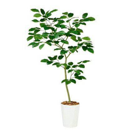【直送】【人工観葉植物】ベンガルボダイジュFST150(器タイプ:懸崖8号)99117※画像は器タイプ(RP)器要確認【07】《 造花(人工観葉植物) 人工観葉植物「は行」 ボダイジュ 》